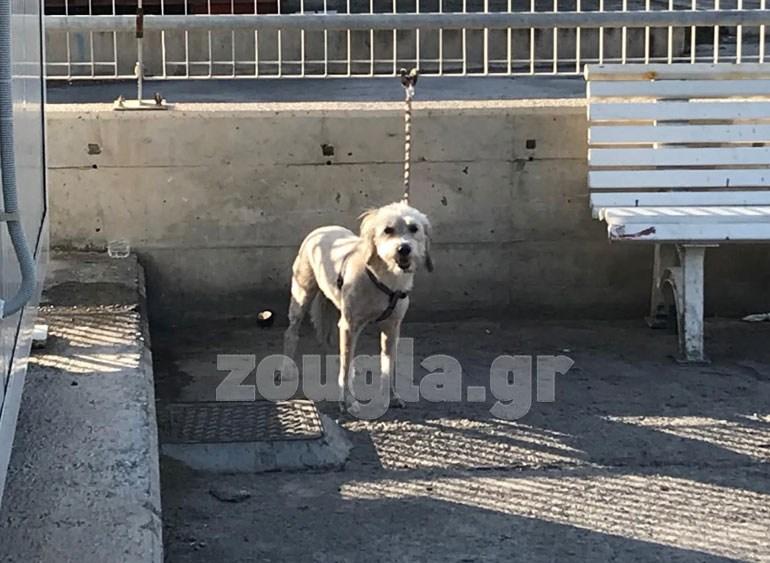 O σκύλος που κατάφερε να επιζήσει