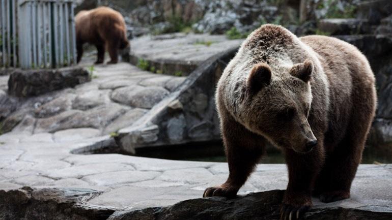 Ξύπνησαν οι αρκούδες στο Νυμφαίο Φλώρινας